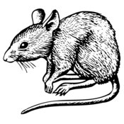 MOUSE001