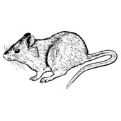MOUSE004