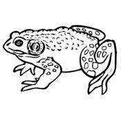 FROG02